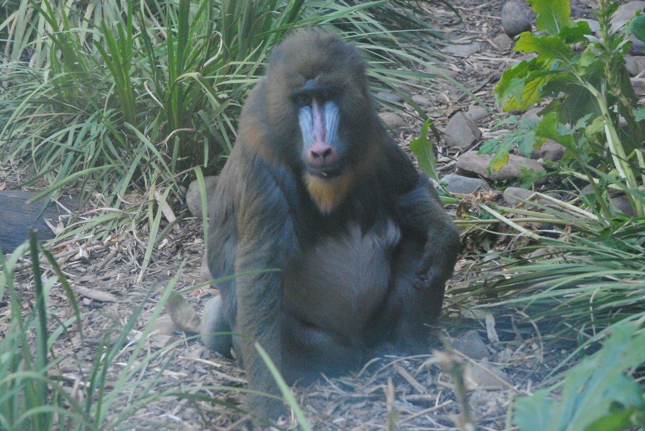 zoo dating australia ansfelden