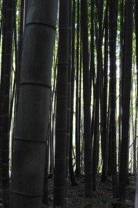 Japan 2012 167