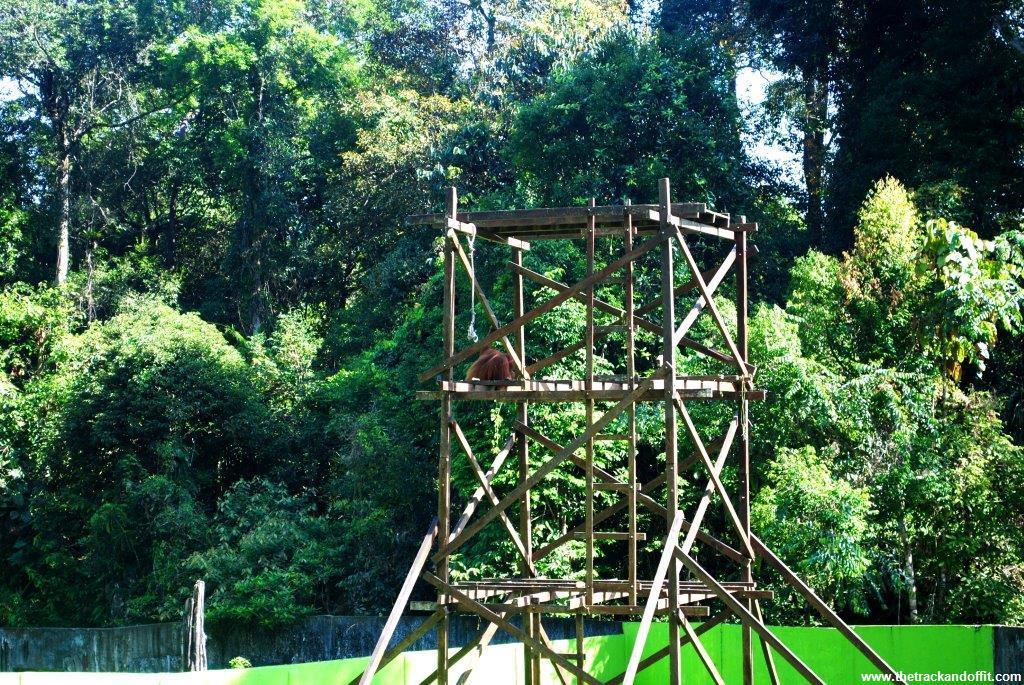 Borneo 914