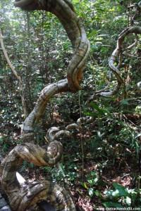 Borneo 918