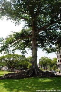 Borneo 941
