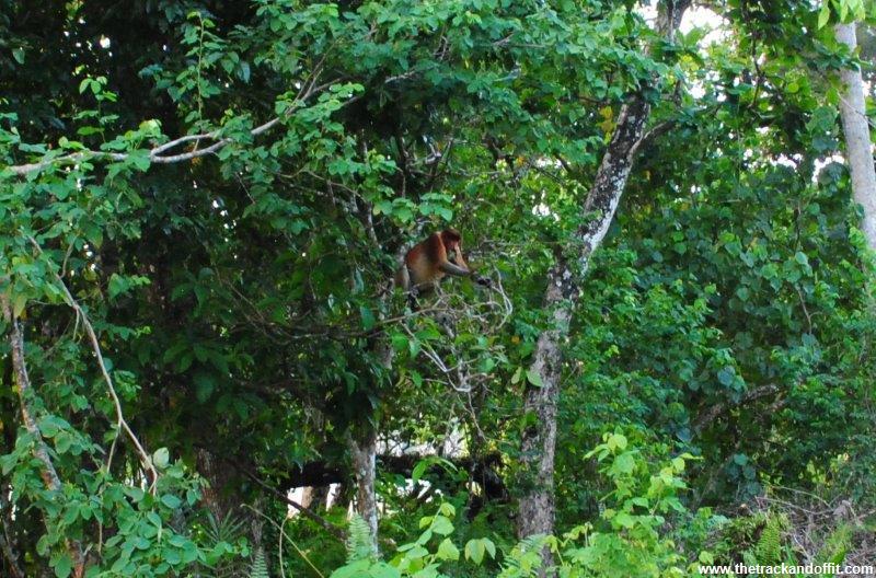 Borneo 1023a