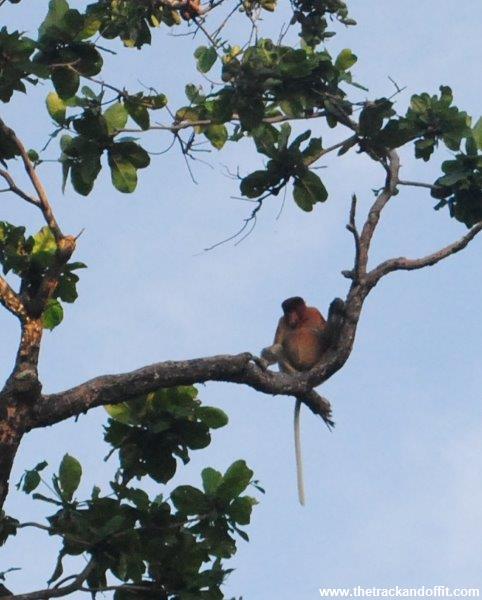 Borneo 1034a