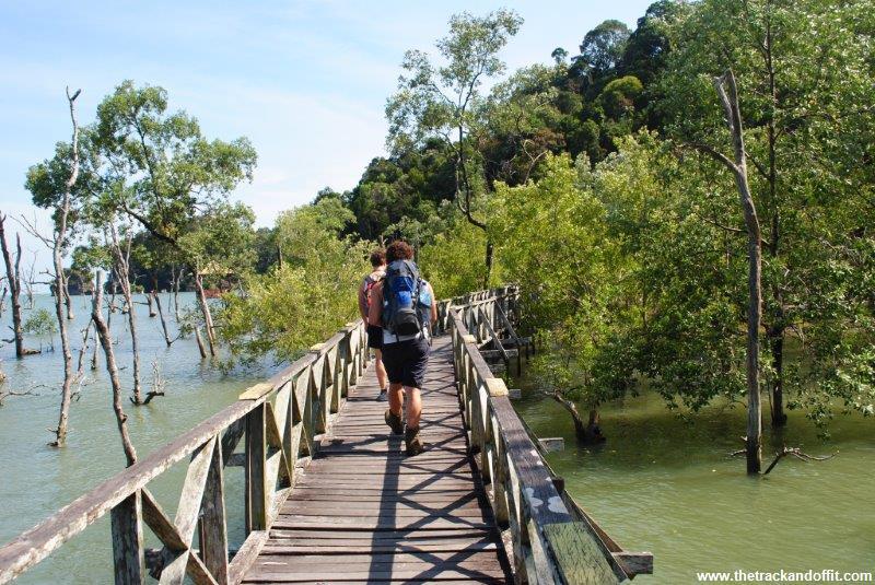 Borneo 965