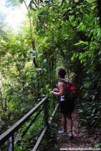Borneo 970