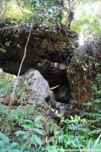 Borneo 971
