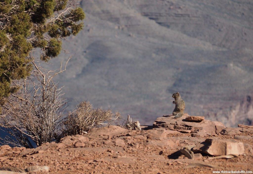 Grand Canyon 078