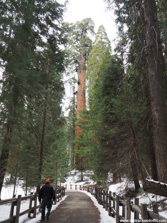 Sequoia 030